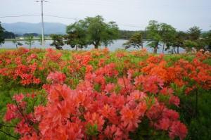 徳良湖花いっぱいの会